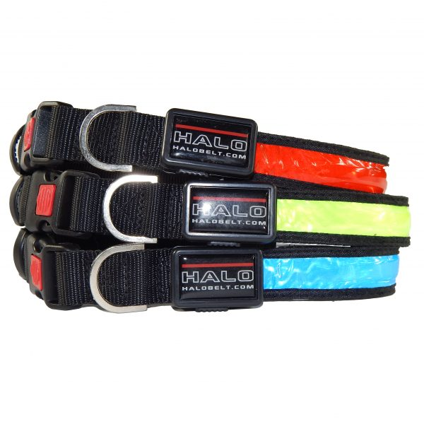Three Halo LED Collar