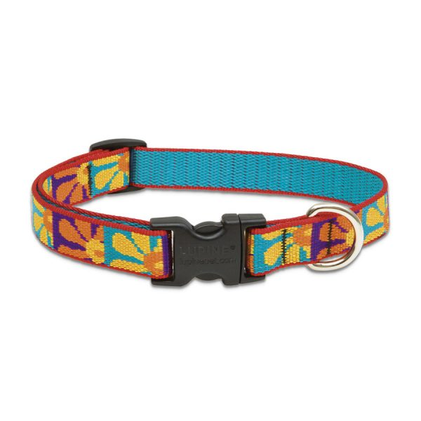 Lupine Crazy Daisy, collar