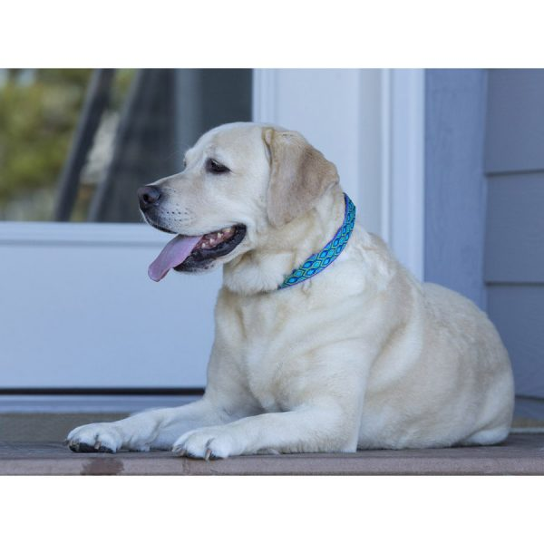 Lupine blue Rain Song Collar on dog