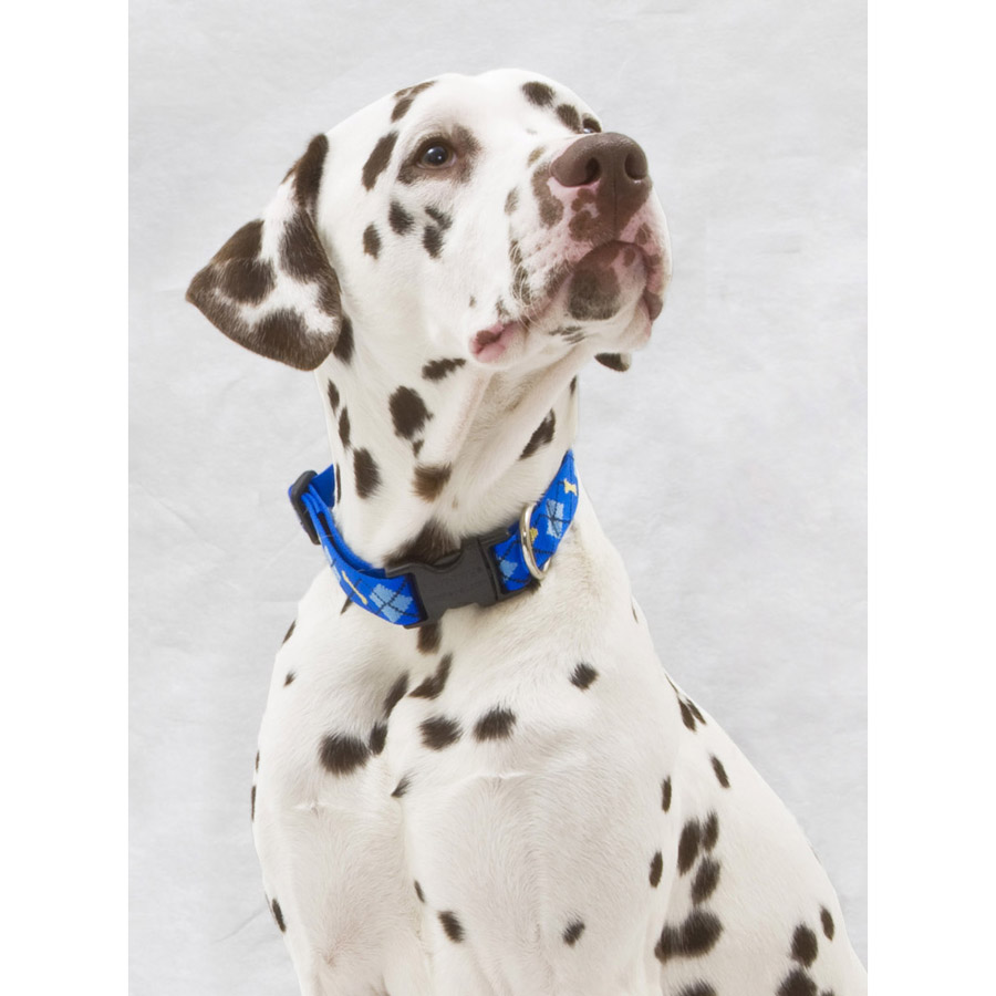 Dapper Dog Lupine, collar