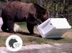 Grizzly cooler Bear strong Cooler