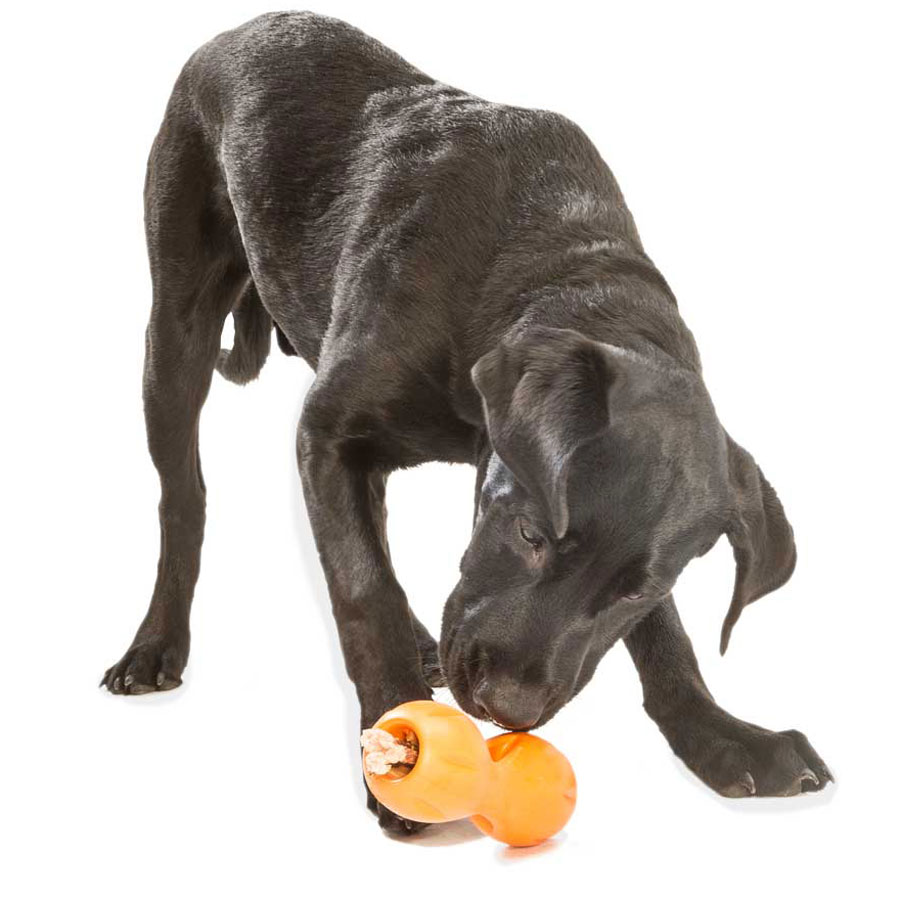 dog, toy west paw, treat