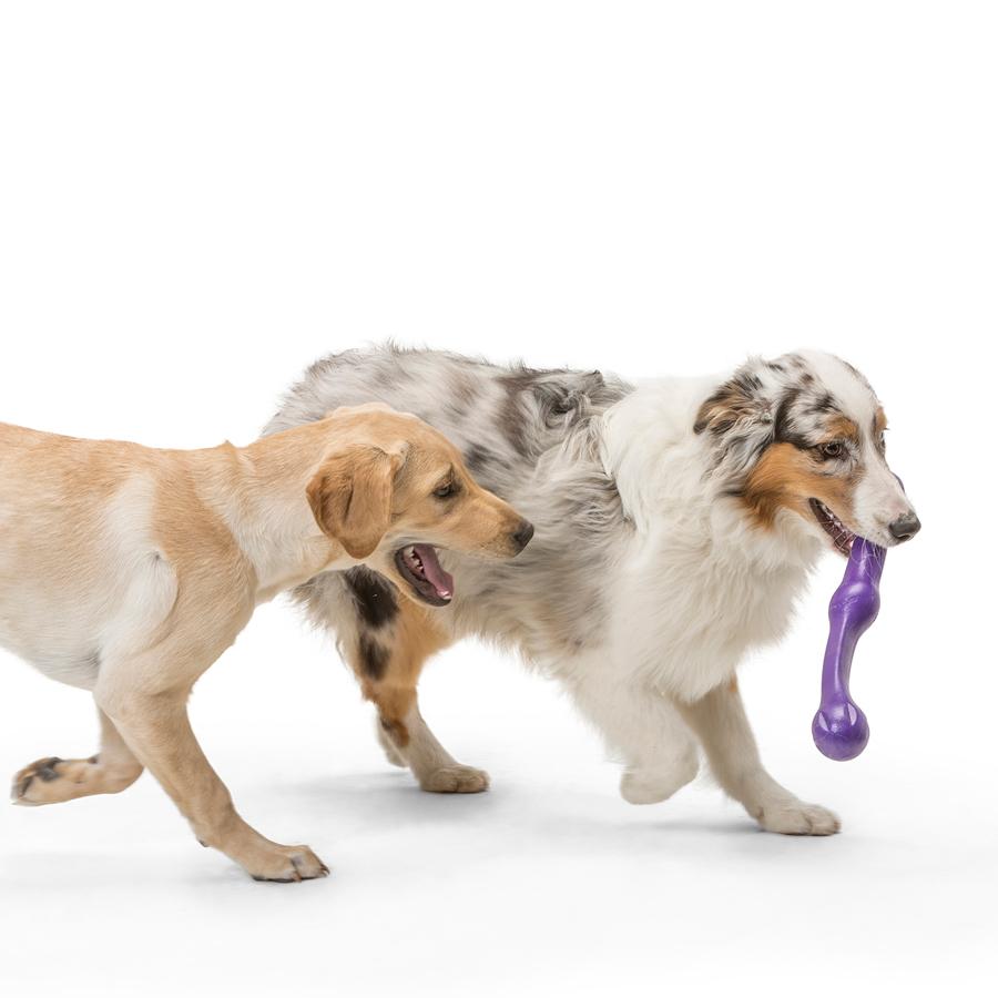 purple, stick, dog, toy