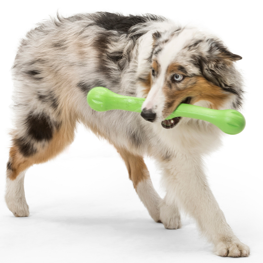 green, stick, dog, toy