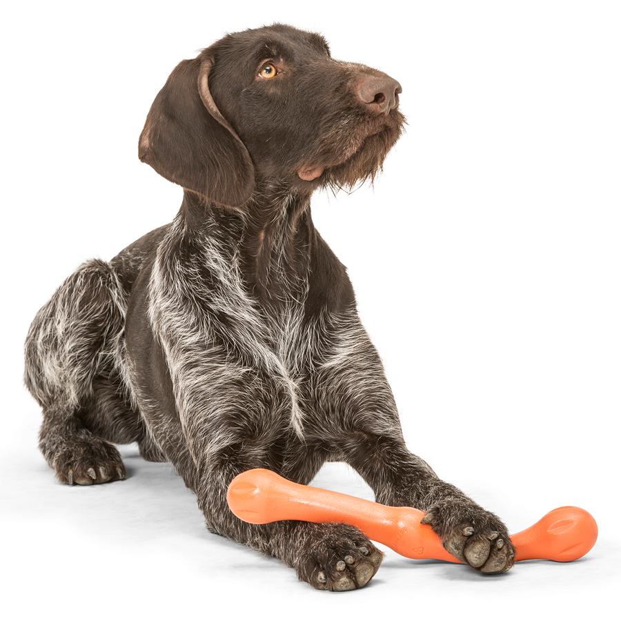 melon, stick, dog, toy