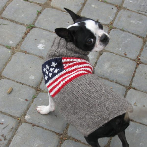 Chilly-Dog--AMERICAN-FLAG