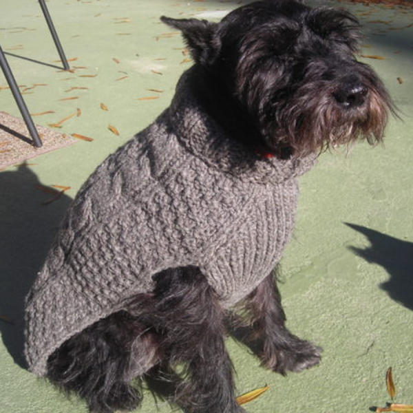Dog in a Gray Cable Sweater