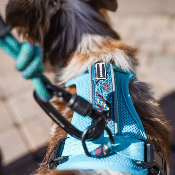 dog, adventure, teal, blue