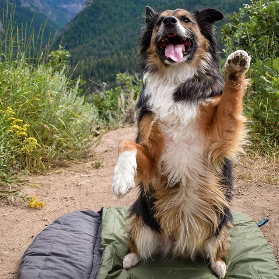 dog, adventure, bed, outdoor
