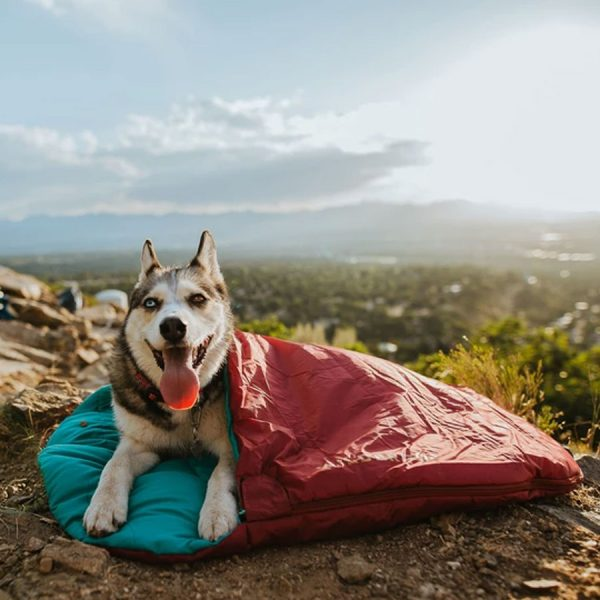 dog, adventure, bed, outdoor