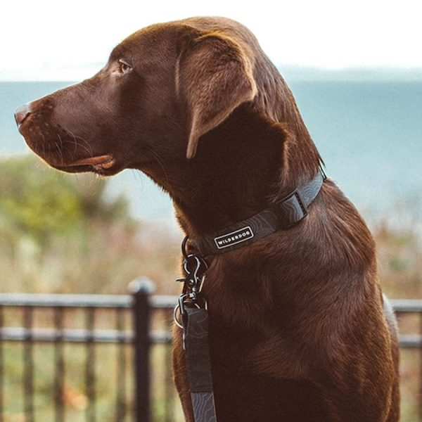 A dog wearing a Black colored waterproof collar by Wilderdog
