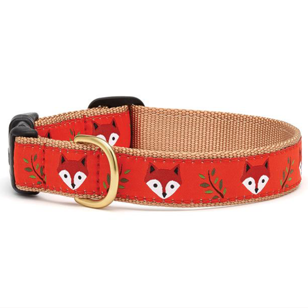 Foxy faces on and orange collar