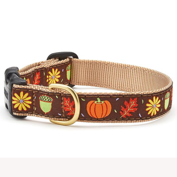 Fall pumpkins, acorns and leaves on a brown collar