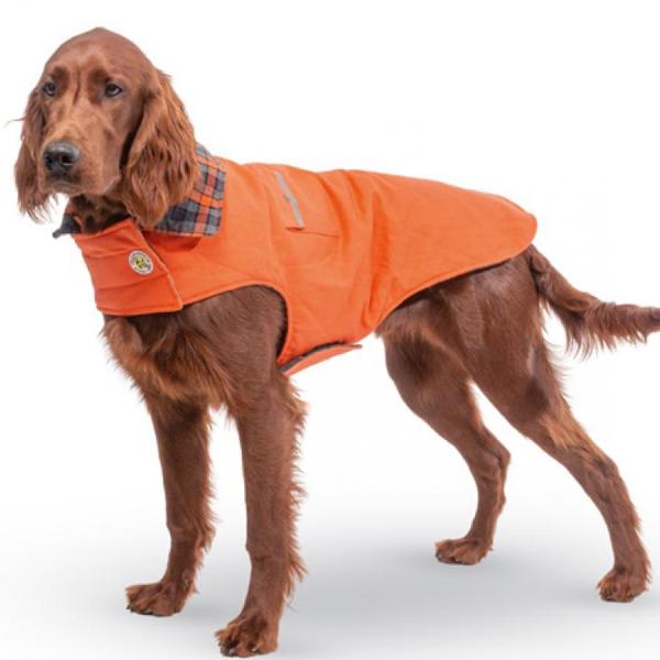 Orange Field Coat plaid collar on a irish setter