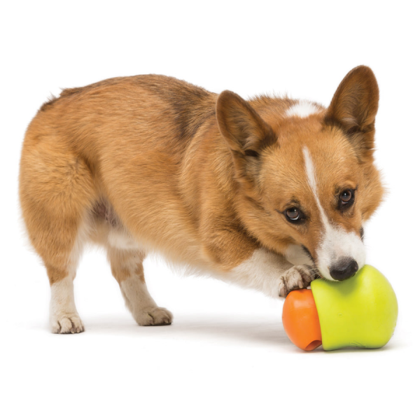 A toy to put a treat in for your dog