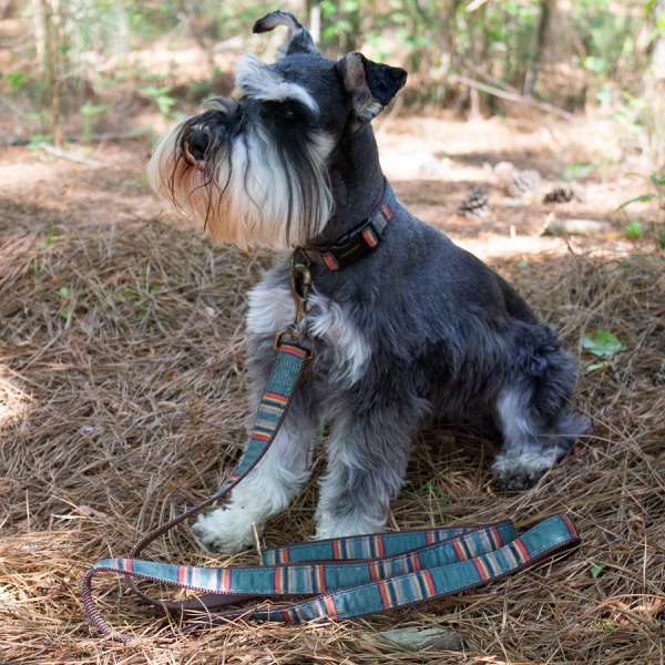 Pendleton Vintage Camp Collar and Leash