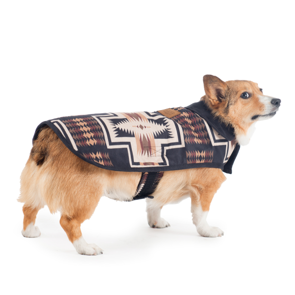 Corgi in a Pendleton Harding Coat