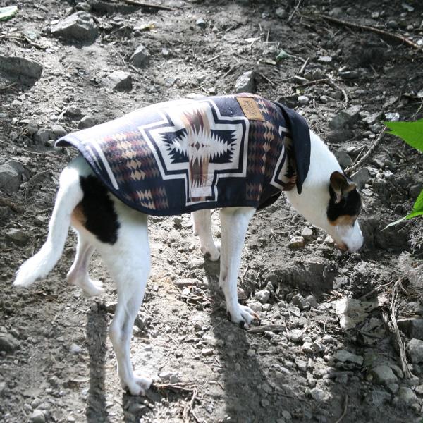 Harding Coat on a Dog