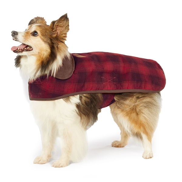 Pendleton Red Ombre on a Collie