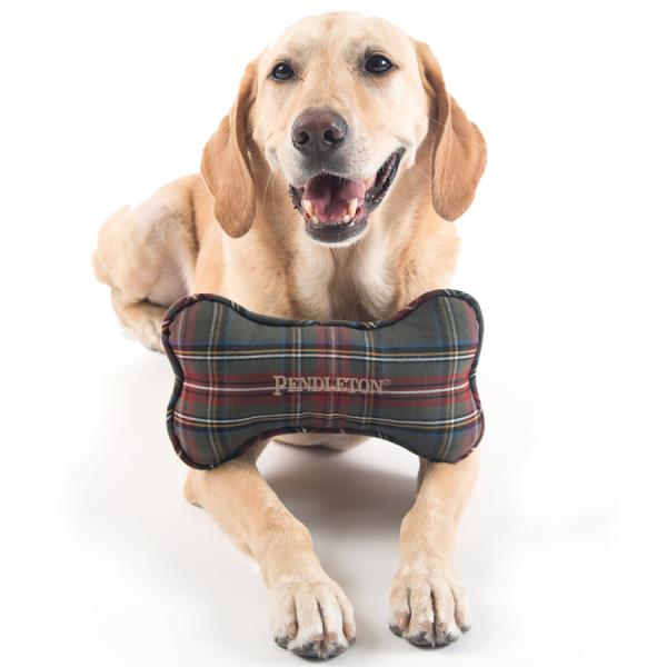 Dog with Pendleton Grey Stewart Tartan Bone