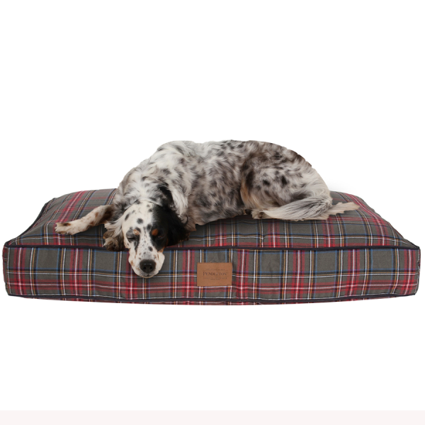 Setter on the Grey Stewart Tartan Napper
